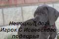 Сайт оГРОМной собаки